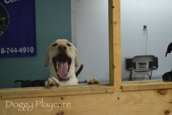 doggy playcare center